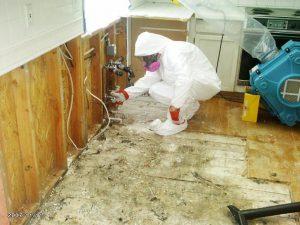 Bekæmpelse af skimmelsvamp kan være miljøvenlig.