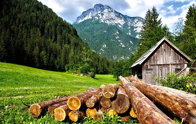 Træfældning pris: Beregn selv prisen på træfældning