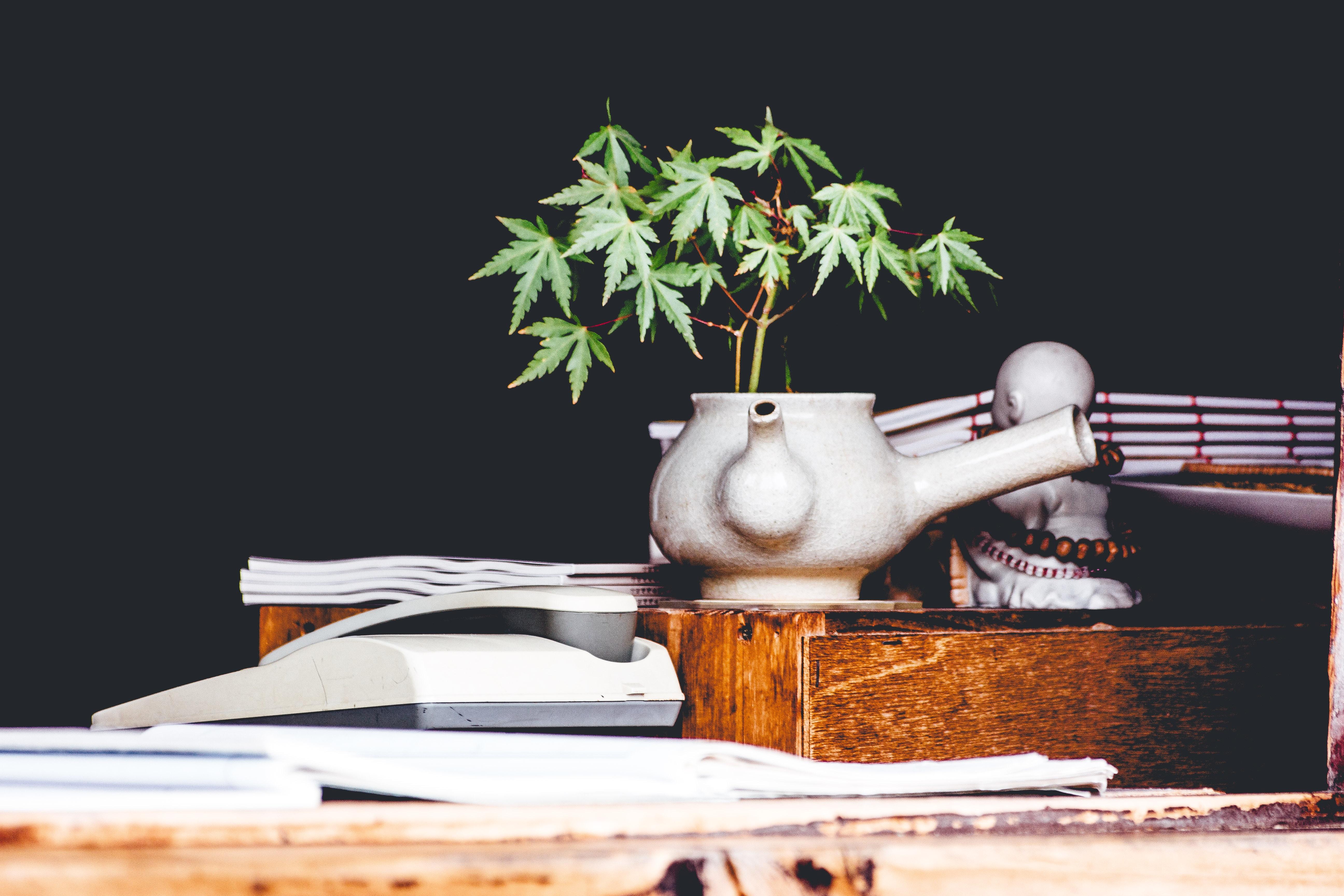 Medicinsk cannabis hjælper sygdomsramte danskere